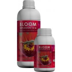 Bloom Explosion 13 - 14
