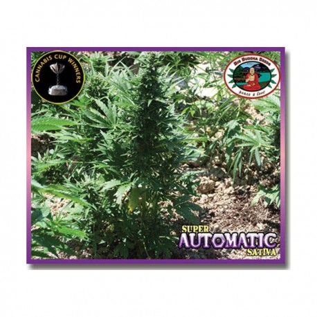 Super Automatic Sativa