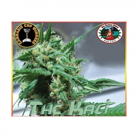 The Kali fem - Big Buddha Seeds