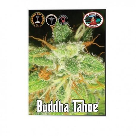 Buddha Tahoe fem