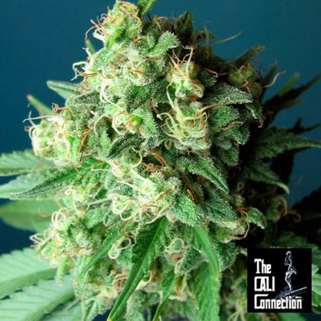 Green Crack - The Cali Connection