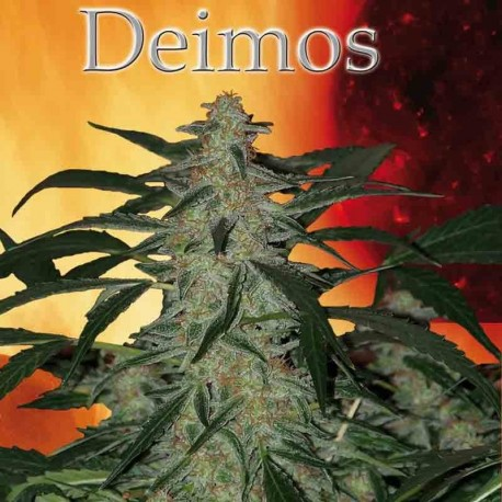 DEIMOS REG. - Buddha Seeds