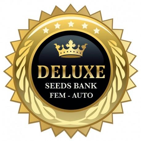 Cartier Kush fem - Deluxe Seeds