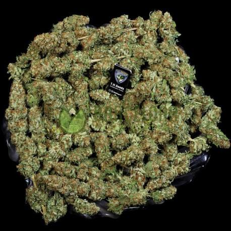 Bubblegum reg. - TH Seeds