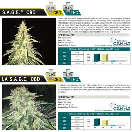 S.A.G.E CBD fem - TH Seeds
