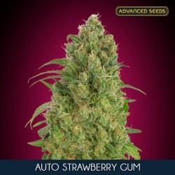 Strawberry Gum auto - Advanced Seeds