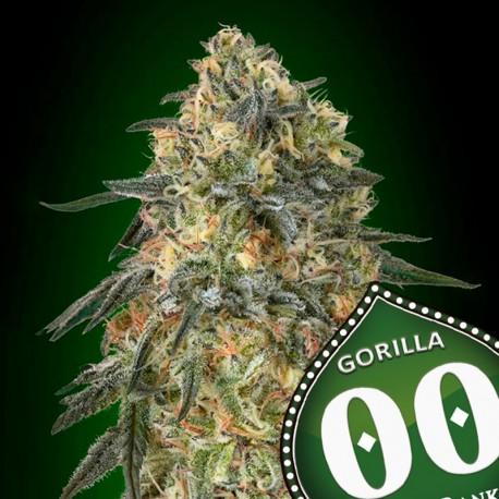 Gorilla fem - 00 Seeds