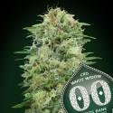White Widow CBD fem - 00 Seeds
