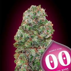 Bubble Gum - 00 Seeds