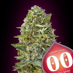 Caramel Kush fem - 00 Seeds