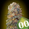 Sweet Critical fem - 00 Seeds
