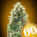 Auto 00 Cheese - 00 Seeds