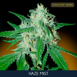 Haze Mist fem - Advanced Seeds