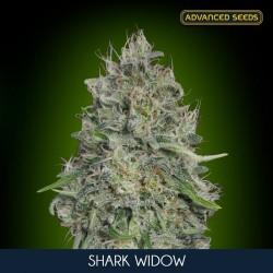 Shark Widow fem - Advanced Seeds