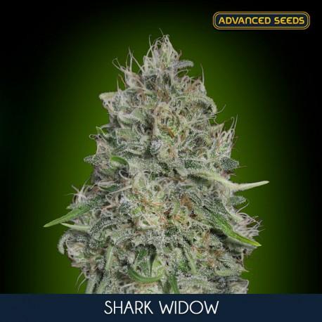 Shark Widow fem