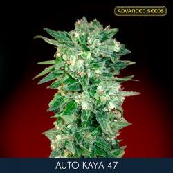 Kaya 47 auto - Advanced Seeds