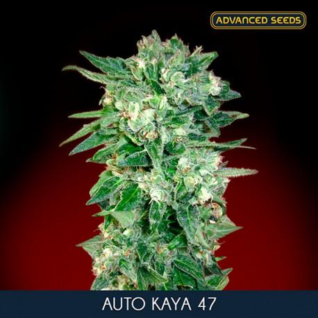 KAYA 47 Auto