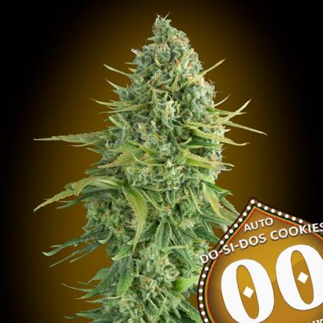 Auto Do-Si-Dos Cookies fem - 00 Seeds