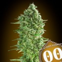 Do-Si-Dos Cookies fem - 00 Seeds