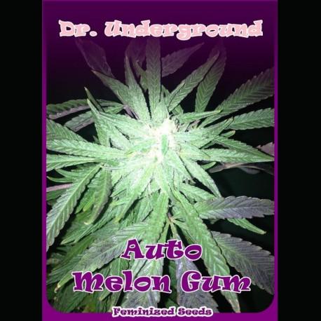 Melon Gum auto - Dr. Underground