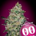 Bubble Gum Fast Version fem - 00 Seeds