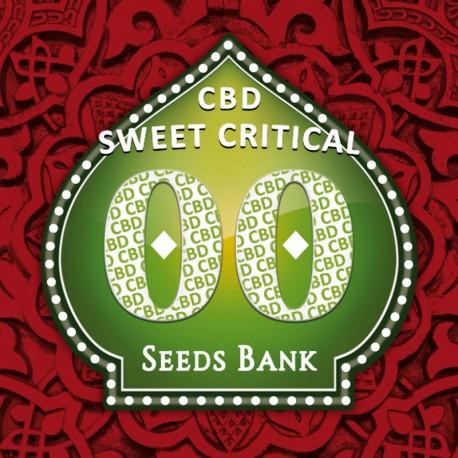 Sweet Critical CBD fem - 00 Seeds