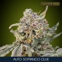 Somango Glue auto - Advanced Seeds