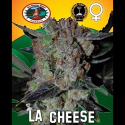 LA Cheese fem - Big Buddha Seeds