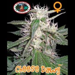 Cheese Dawg fem - Big Buddha Seeds