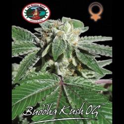 Buddha Kush OG fem - Big Buddha Seeds