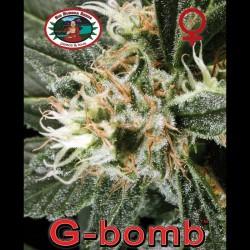 G-Bomb fem - Big Buddha Seeds