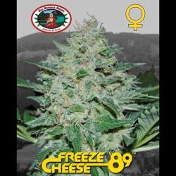 Freeze Cheese 89 fem - Big Buddha Seeds