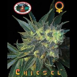 Chiesel - Big Buddha Seeds