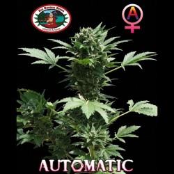 Automatic auto - Big Buddha Seeds