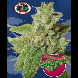 Cherry Moon Pie fem - Big Buddha Seeds