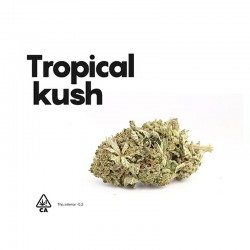 Tropical Kush CBD - Life CBD