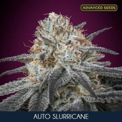 Slurricane auto - Advanced Seeds