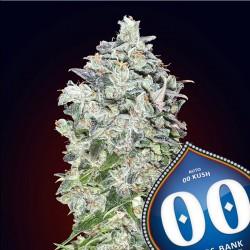 Auto 00 Kush - 00 Seeds