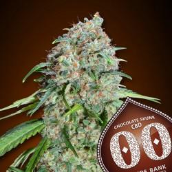 Chocolate Skunk CBD fem - 00 Seeds