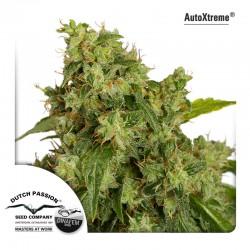 AutoXtreme - Dutch Passion