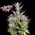 Weeding Glue auto - Fast Buds